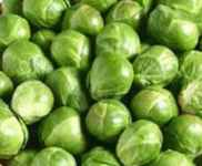 Long Island Improved Heirloom Brussels sprout
