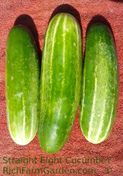 Straight Eight Cucumber