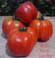 Schimmeig Striped Hollow tomato